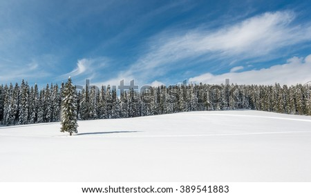 Winter forest landscape with cottages under the clear sky