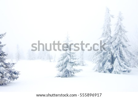 winter forest with snow and frost