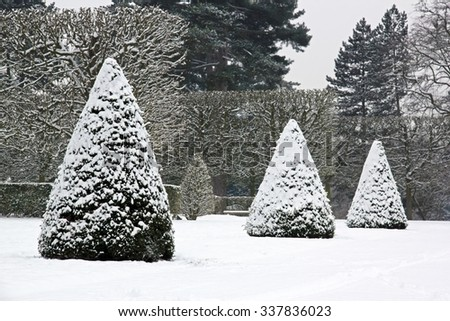 Winter Garden, yew trees under snow (near Paris France)