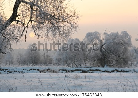 winter landscape beautiful sunset over the oak grove in hoarfrost