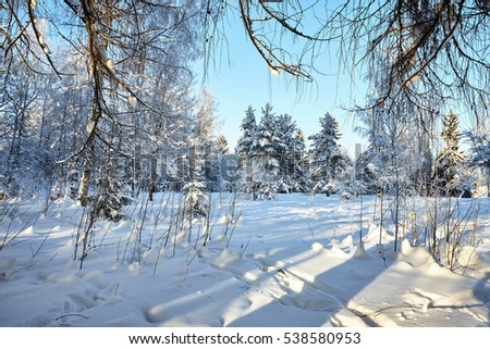 Winter landscape - forest nature under bright evening sunlight with frosty trees