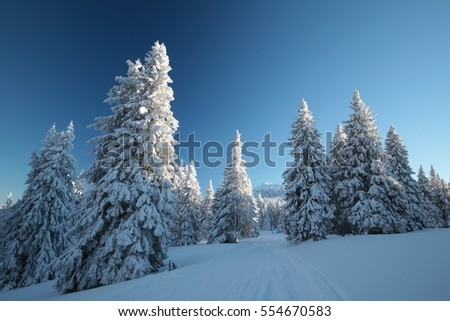Winter scenery on the background of a cloudless sky.