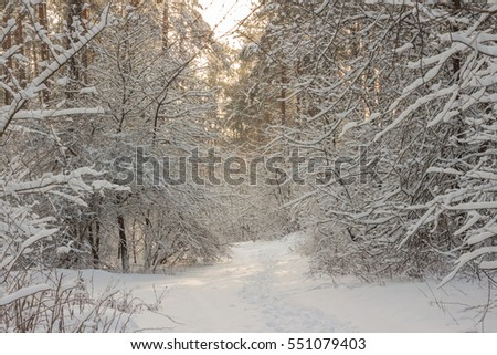 winter snowy forest . white landscape.