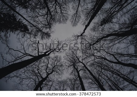 Winter treetops, gloomy and dark