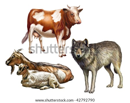 Wolf, cow and goats. Farm animals, original digital illustration. Clipping path included.