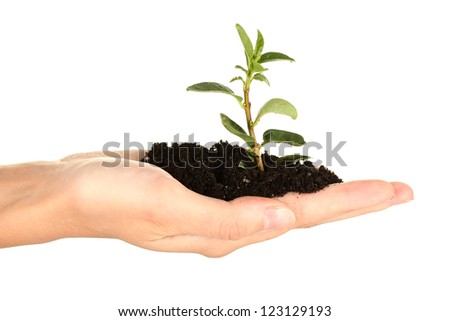 woman's hand holding a plant growing out of the ground, on white background close-up