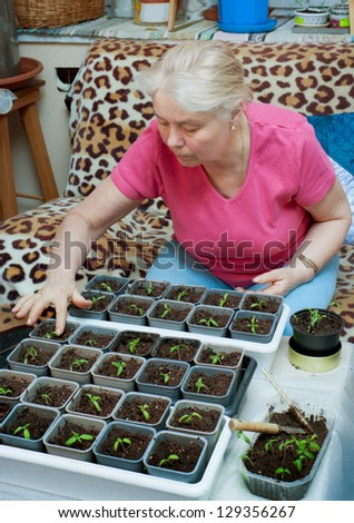 Woman takes care of the seedlings in the home environment