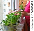 Womanish hands are replanted by flowers on a balcony - stock photo
