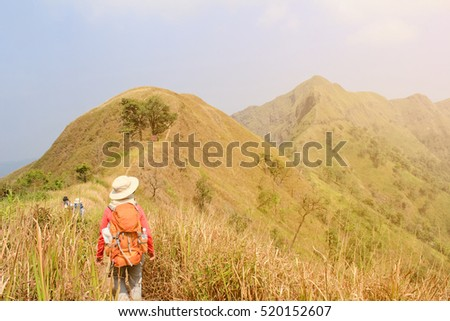 Women hiking with backpack holding trekking sticks high in the mountains covered with tree in summer. Landscape observation during a short break