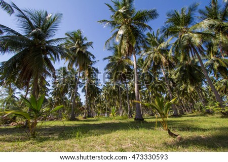 Wonderful landscape with a palm,jungle
