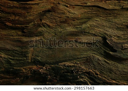 wood background texture old tree