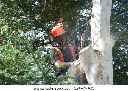Wood-chips creating a dust storm as chainsaw goes through tree trunk