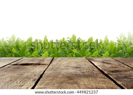 Wood table with green leaves on white background