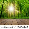 wood textured backgrounds  on the forest backgrounds - stock photo