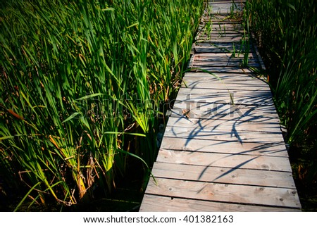 Wooden path through the reed