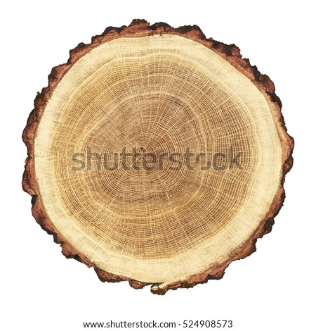 Cross section cut wood tree trunk stock photo 475526587 for Large tree trunk slices