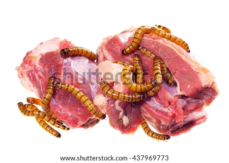 Wormy spoiled beef steak, ugly unhealthy food concept, over white