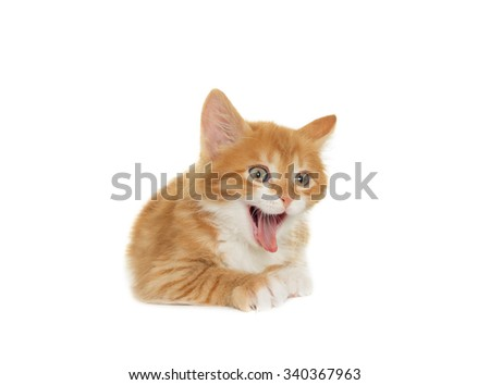 yawning kitten on a white background