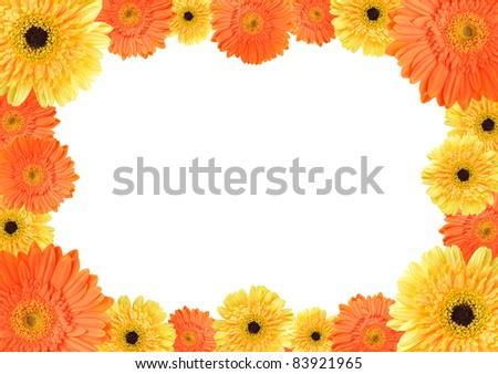 orange daisy-gerbera flowers create an oval frame on white background ...