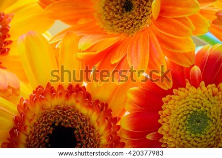 Yellow and orange flowers.
