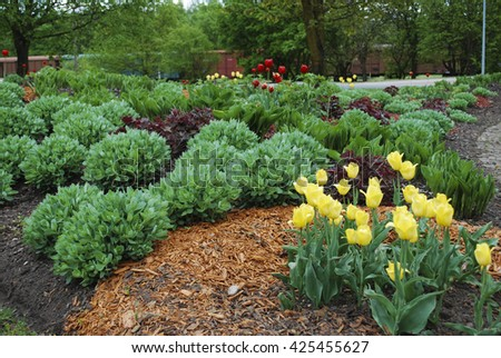 Yellow and red tulips, Sedum telephium 'Herbstfreude', Hosta sieboldiana, Heuchera on the flowerbed, sprinkler with orange dyed mulch. Ornamental plants for landscaping.