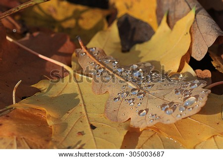 yellow autumn leaves background fall