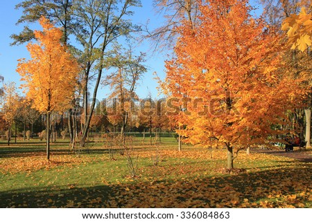 yellow bright  trees on blue sky in autumn park, selective focus