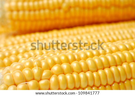 Yellow corn on the cobs