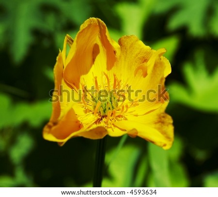 Yellow flowe on green background