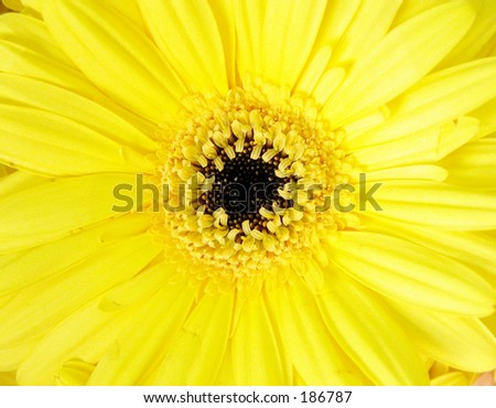 yellow flower detail