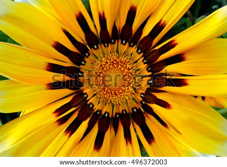 Yellow flower with ant pollen and visual impact