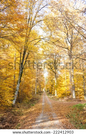 yellow forest in fall