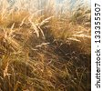 Yellow grass detail during autumn in bright sunlight - stock photo