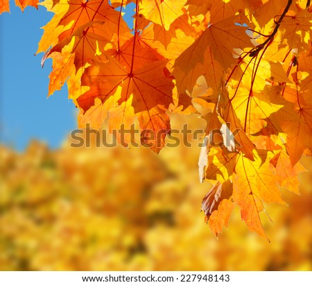 Yellow, orange and red autumn leaves