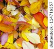 yellow orange autumn leaves lying in the faded foliage - stock photo