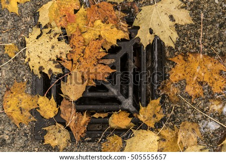 Yellow platanus leaves over a gutter