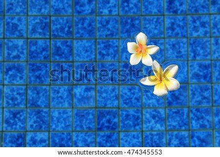 Yellow plumeria in a swimming pool - dreaming of a tropical summer