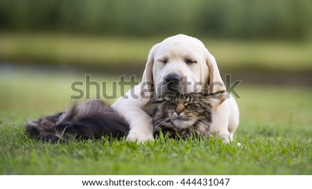 yellow puppy with tabby cat