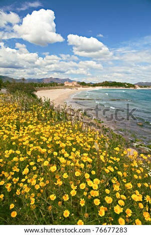 Yellow spring flowers on Italian beach Sardinia beautiful white clouds in blue sky holliday landscape tourism wildflowers under bright sun