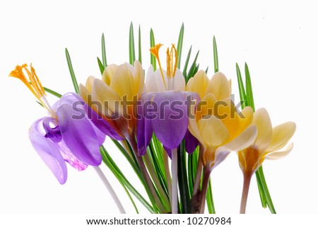 yellow,violet flowers
