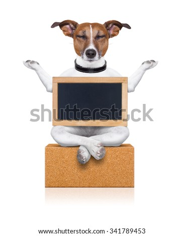yoga meditation dog isolated on white background with banner and placard on a  brick