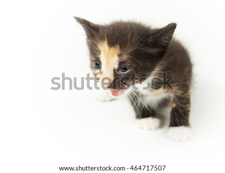 Young amusing spotted kitty on white background