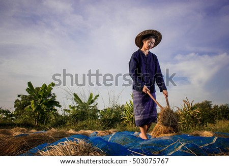 Young  Asian threshing rice on blue sky for background, Thai lifestyle concept.