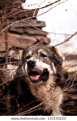 young bulgarian sheep dog rest in the forest - stock photo