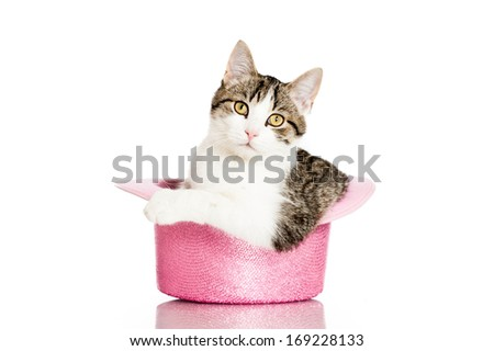 Young cat sitting in a cylinder hat