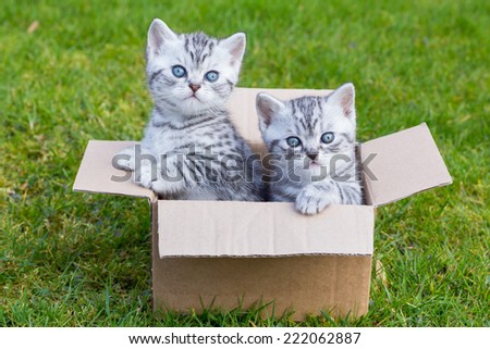 Young cats in cardboard box on green grass