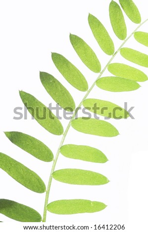 young green leaves against white background