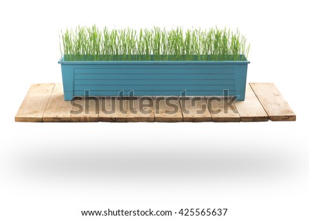 Young green (Wheat seeds) plant in pot on wood