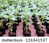 young plant,Sprout - stock photo
