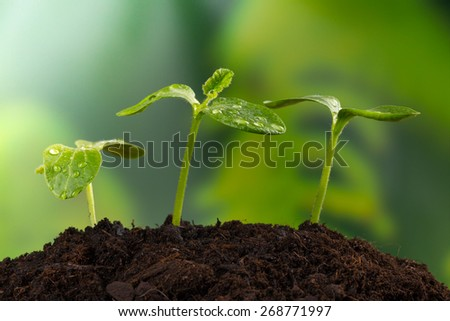 Young plants in pile of earth, concept of new life